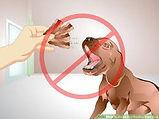 avoid overfeeding.jpg