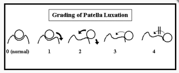 patella luxation.png