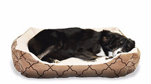 Pet Beds that Wow!