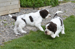 puppy2-24