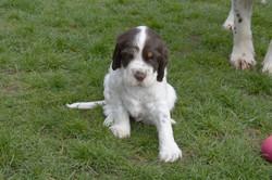 puppy1-21