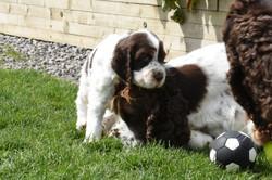 puppy1-36