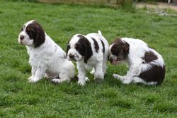 puppy1-34