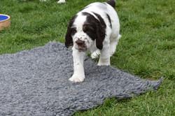 puppy3-54
