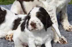 puppy3-10