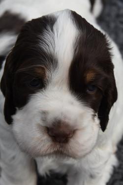 puppy1-04