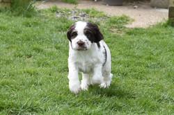 puppy3-43