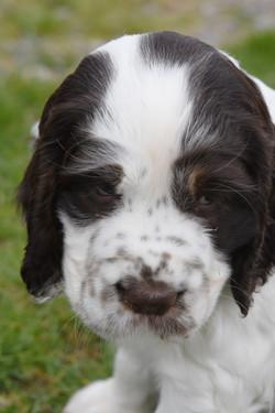 puppy3-30