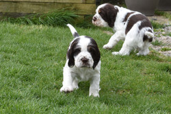 puppy3-24