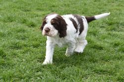 puppy2-36