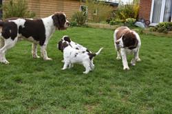puppy1-32