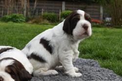puppy1-05