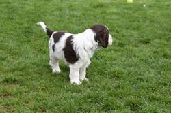 puppy2-33