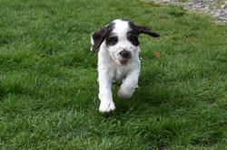 puppy3-21