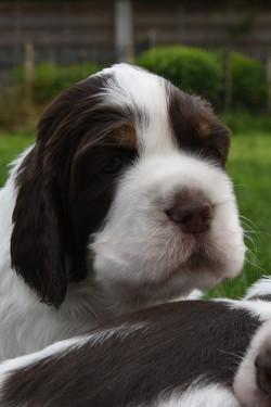 puppy1-03