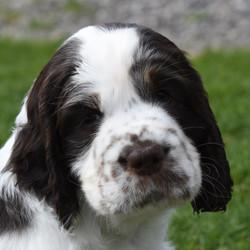 puppy3-45