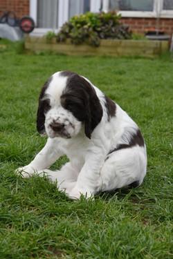 puppy3-36