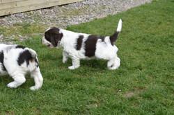 puppy2-21