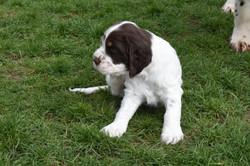 puppy2-19