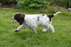 puppy1-38