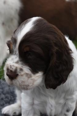 puppy1-30