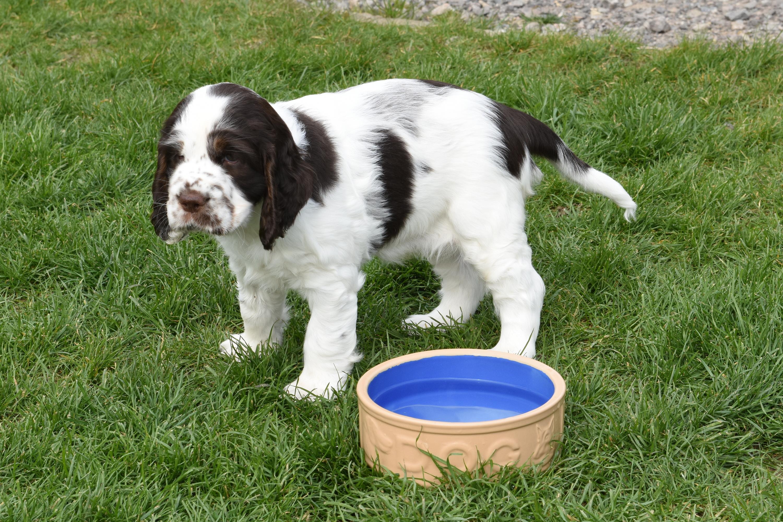 puppy3-49
