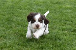 puppy2-29