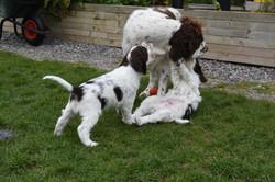puppy1-40
