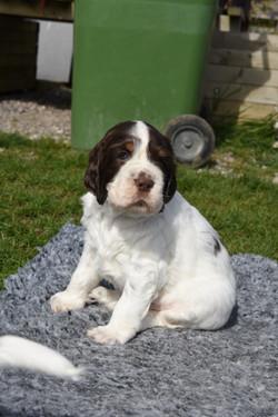 puppy1-07