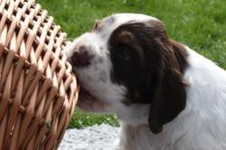 puppy1-13