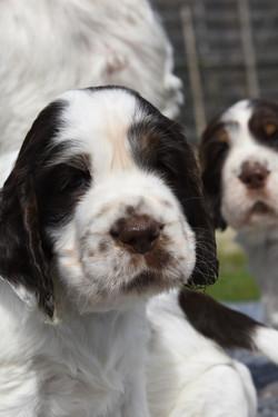 puppy3-11