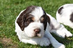 puppy2-05