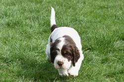 puppy1-22