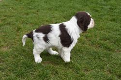 puppy2-25
