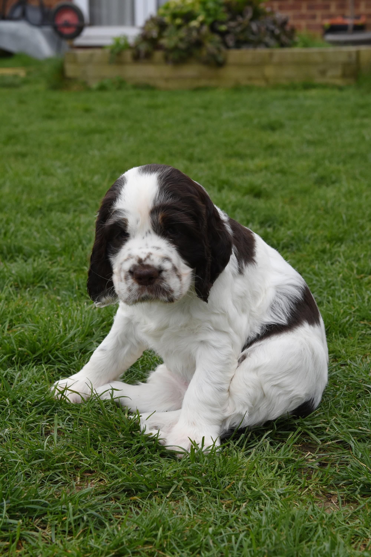 puppy3-35