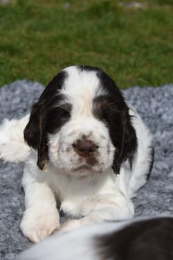 puppy3-12