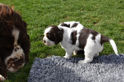 puppy2-08
