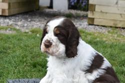 puppy2-42