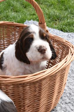 puppy1-14