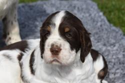 puppy1-08