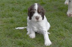 puppy2-20