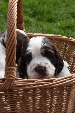 puppy3-13