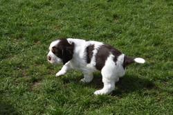 puppy2-09