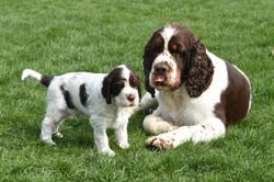 puppy1-15