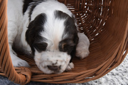 puppy3-15