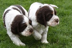 puppy1-29