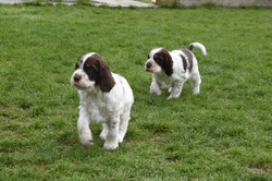 puppy2-47