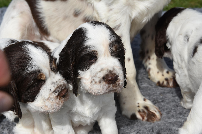 puppy3-18