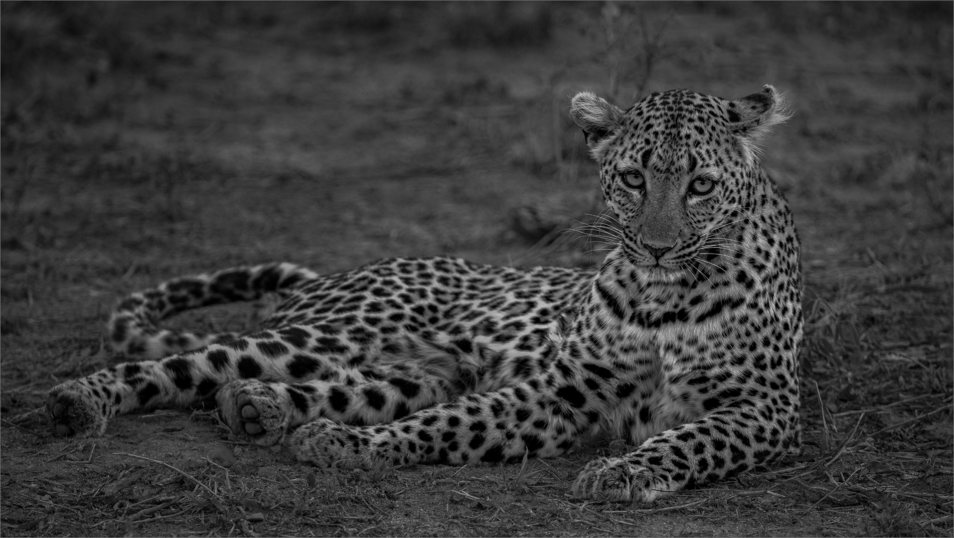Leopard relaxing-Russell James