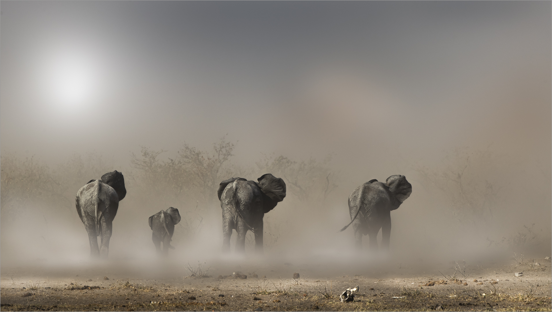 Giants in the Dust-ANNEMARIE DU PLESSIS.
